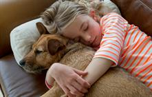 Pets and divorce – who keeps the family pet?
